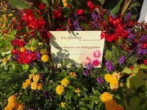 tru blooms sign