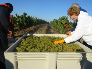 Cakebread American Harvest Workshop Day 3