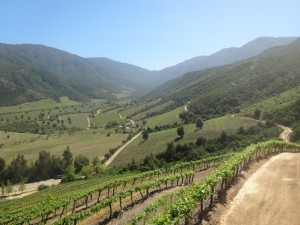 What You Need to Know About Chilean Wines