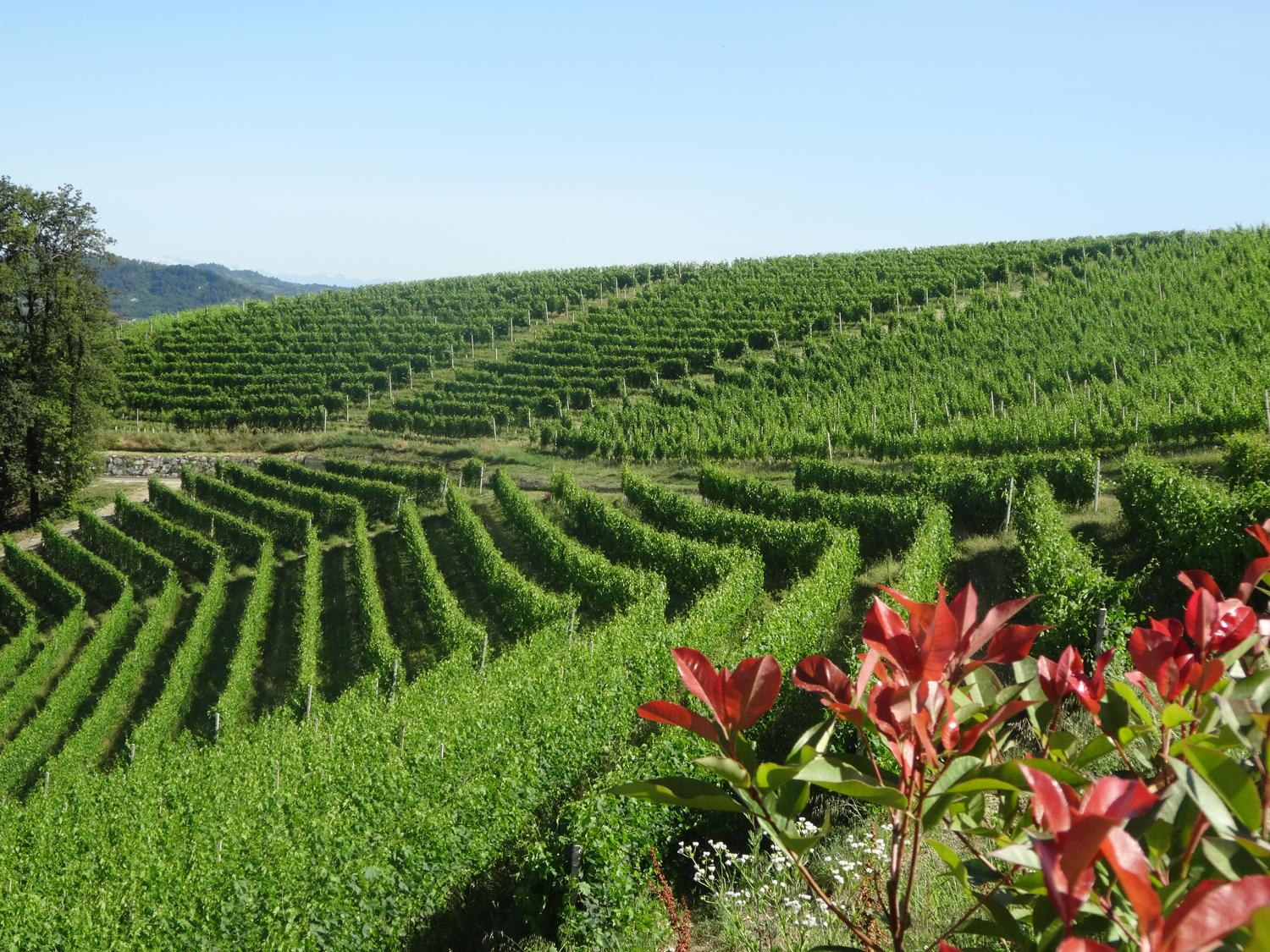 When In Piemonte Italy The Winery You Must Visit