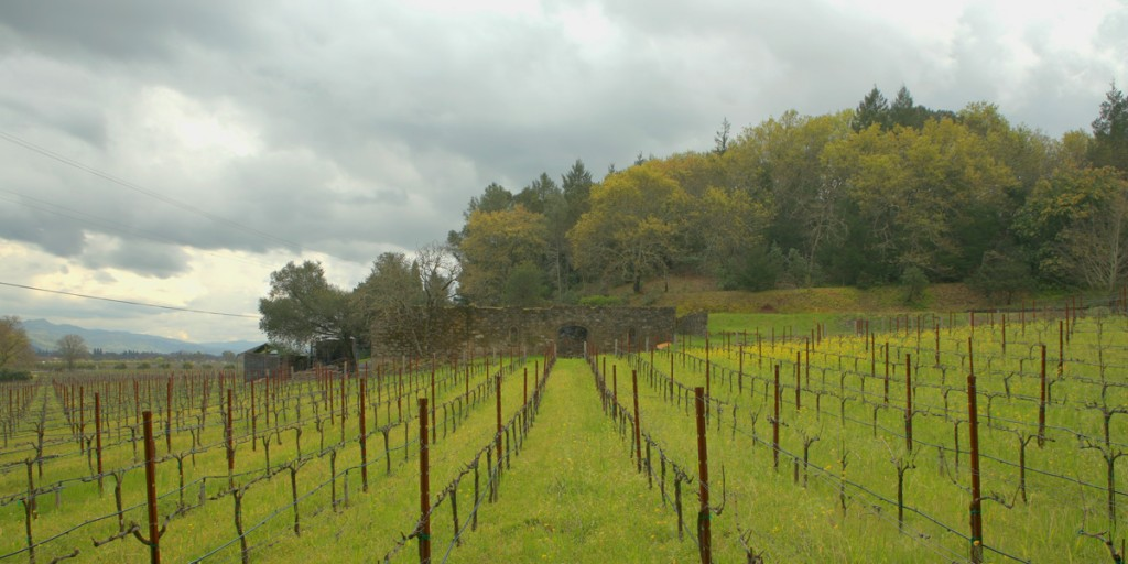 Helms Vineyard