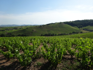There's More to Beaujolais than Beaujolais Nouveau (Part Une)