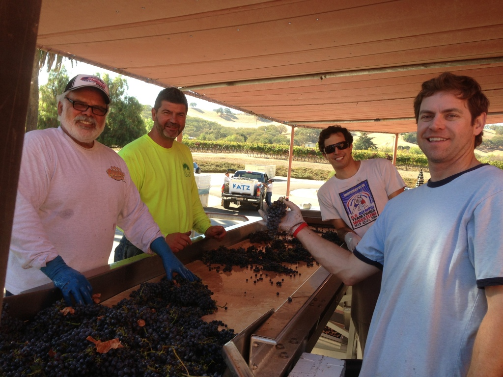 Photo: from left to right , future father in law , John DeFrietas , Mitch Katz , assistant winemaker Zach Thomsen , tasting room mgr . Andrew Wigginton . Sorting grapes during harvest. Courtesy Mitchell Katz Winery