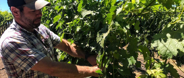 In the Vineyard: Meet the Grape Growers